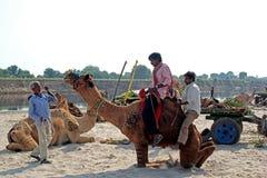 Camel Fair Vautha, Gujarat Stock Photography