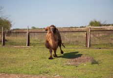 Camel on the farm Royalty Free Stock Photos