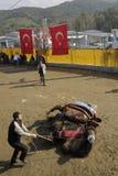 Camel fight Royalty Free Stock Photos