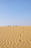 Camel foot print in desert Stock Photos