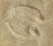 Camel foot prints in sand desert Royalty Free Stock Image