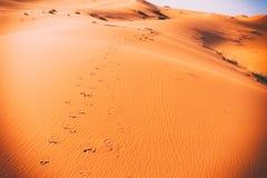 Camel footprints, Sahara, Erg Chebbi Royalty Free Stock Image