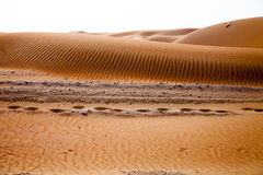 Camel footprints and wind created patterns in the sand dunes of Liwa oasis, United Arab Emirates Stock Images
