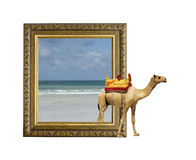 Camel in frame with 3d effect Royalty Free Stock Photography
