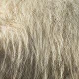 Camel fur. Close up shot of the camel fur Royalty Free Stock Image