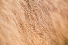 Camel fur Royalty Free Stock Photography