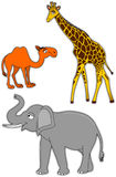 Camel, giraffe and elephant Royalty Free Stock Photography