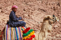 Camel guide Royalty Free Stock Photos