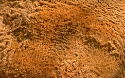Camel hair Royalty Free Stock Photo