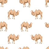 Camel, hand draw style. Royalty Free Stock Image