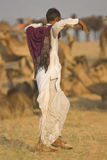 Camel Herder Stock Photo