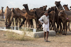The camel herder. A camel herder is standing in front of his camels in Rajasthan Royalty Free Stock Photos