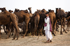 The camel herder. Camel trader of Pushkar, Rajasthan, India  standing in front of his  camels in the fair ground Royalty Free Stock Images