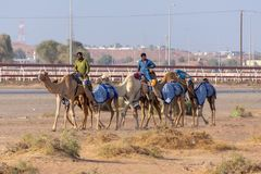 Camel herders walk by race track stock photography