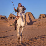 Camel and his cameleer. royalty free stock images