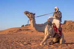 Camel and his cameleer. stock photo