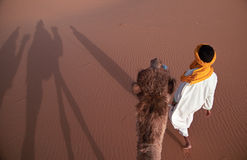 Camel and his driver. Camel driver and tourist guide walk with tourist caravan. Merzouga, Marocco Stock Image