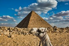 Camel holding pyramid on head royalty free stock photography