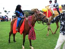 Camel and horse riding in Nairobi Kenya Stock Image
