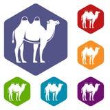 Camel icons set hexagon Royalty Free Stock Photos