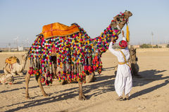 Camel and indian men participate in Desert Festival. Jaisalmer, Rajasthan, India. Camel and indian men wearing traditional Rajasthani dress participate in Mr Stock Photos