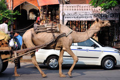 Camel in Jaipur Street Stock Images