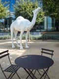 White camel Stock Images