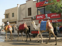 Camel KFC Drive through Royalty Free Stock Images