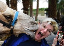 Camel is kissing pretty girl. Travel fun & smartphone