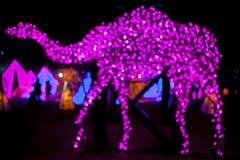 Camel light Royalty Free Stock Photography