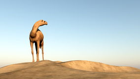 Camel looking behind - 3D render Royalty Free Stock Photography