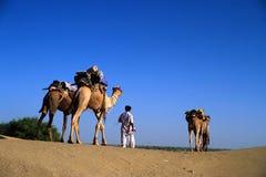 Camel man. In jaisalmer desert, india Stock Images
