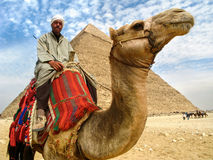 Camel Man in Front of Giza Pyramid, Cairo, Egypt. Portrait of a camel man on his camel in front of the Pyramid of Khafre on the Giza Plateau in Cairo, Egypt Stock Photo