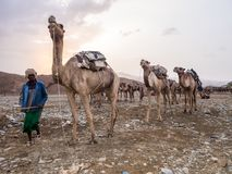 Camel market in the Afar region in northern Ethiopia Royalty Free Stock Photography