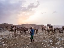Camel market in the Afar region in northern Ethiopia Royalty Free Stock Photos