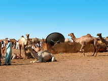 Camel market Stock Photos