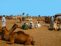 Camel market Royalty Free Stock Photo