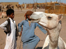 Camel market Stock Photography