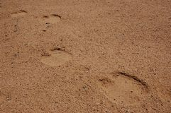 Camel marks in the desert Royalty Free Stock Photos