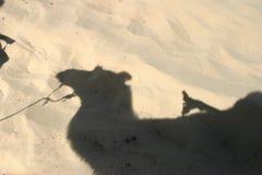 Camel in Mingsha Shan Royalty Free Stock Photos