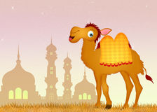 Camel in the mosque Royalty Free Stock Photo