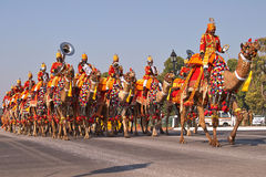 Camel Mounted Band on Parade Stock Photos