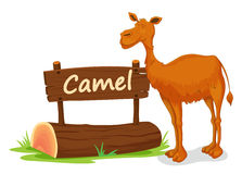 Camel and name plate. Illustration of camel and name plate on a white Stock Images