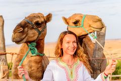 Free Camel Of Morocco Stock Image - 105835791