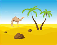 Camel and palms in the Desert, oasis. Vector illustration Stock Photos