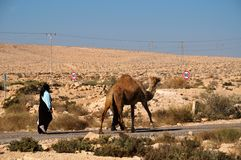 Camel  on parallel road Royalty Free Stock Photo