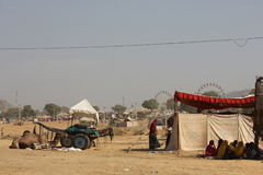 Camel parked in Pushkar Stock Images