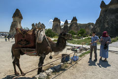 A camel at Pasabagi near Zelve in the Cappadocia region of Turkey. In the Royalty Free Stock Images