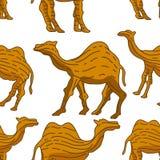 Camel pattern seamless design animal decoration stock image