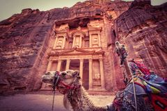Camel in Petra royalty free stock images